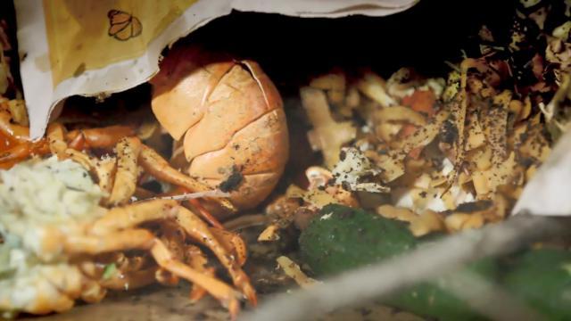 3 règles pour mieux gérer son compost